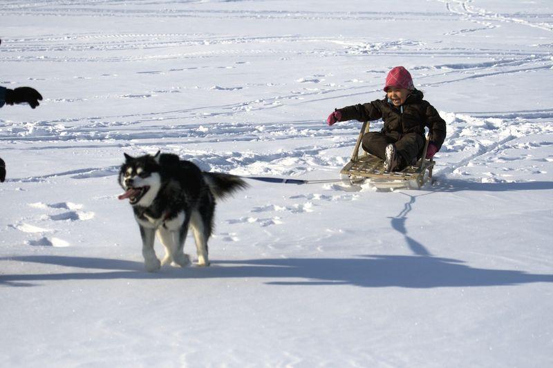 Image Result For Balanced Dog Training